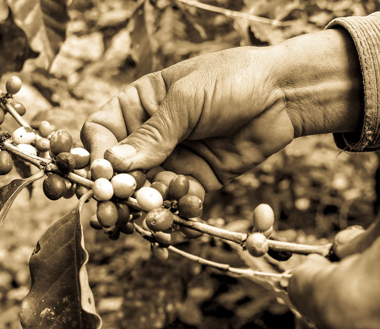 Benefits of Fair Trade