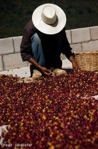 Does the Fair Trade System Eliminate Poverty?